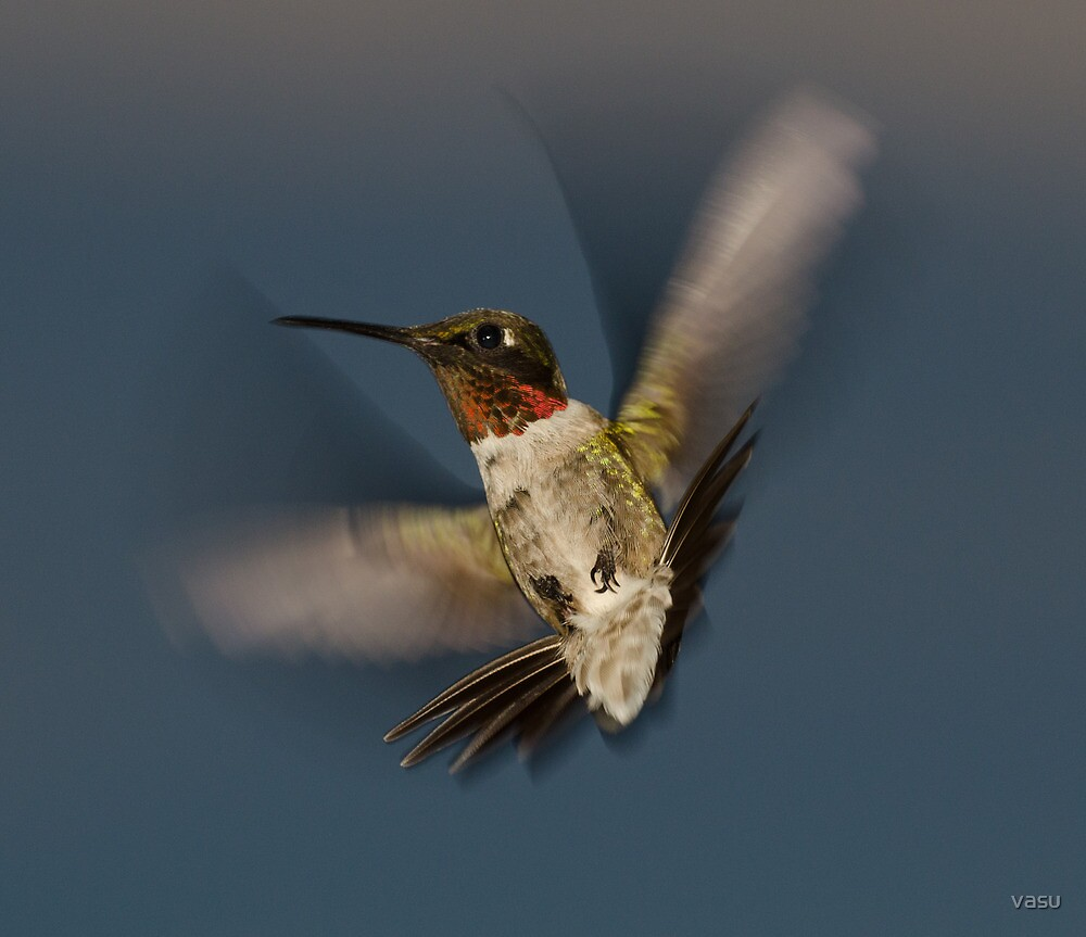 Humming Bird! by vasu