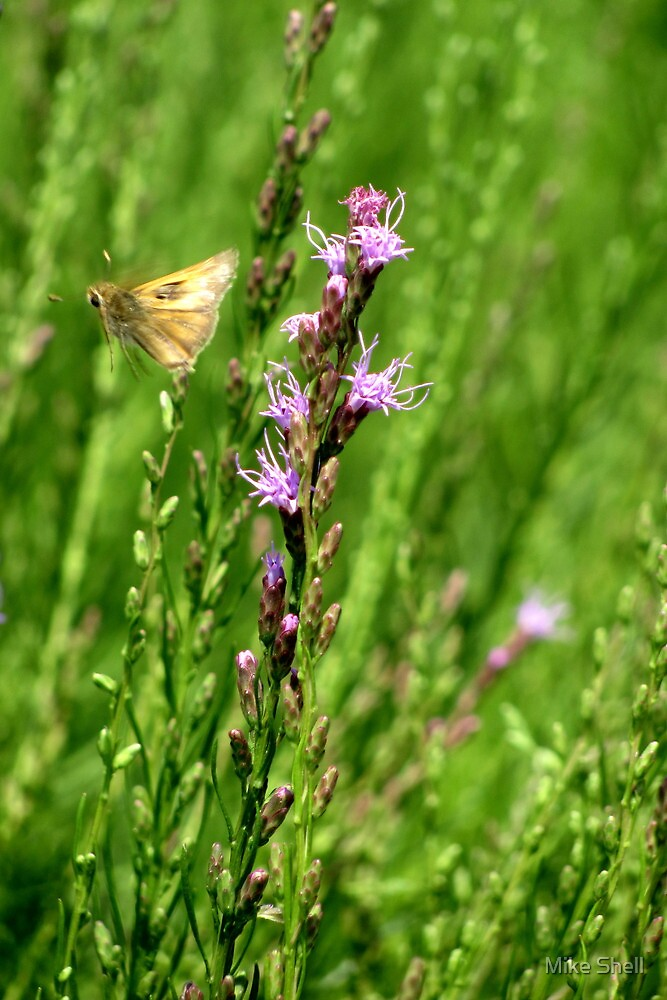 Grass skipper & Dwarf blazing star by Mike Shell