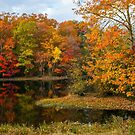 Autumn Pond Reflections by andykazie