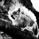 crazy squirrel by Ms-Bexy