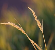 Grass and Blue II by srosu
