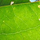 Leaf Veins by FrogGirl