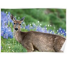 Black Tail Doe Poster
