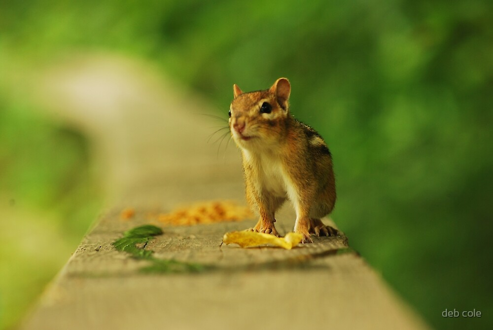 Trade Ya These Leaves for some Peanuts? by deb cole