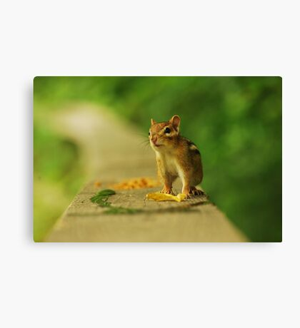 Trade Ya These Leaves for some Peanuts? Canvas Print