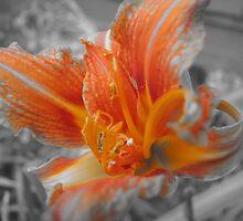 Orange Colored  by Julia Findling
