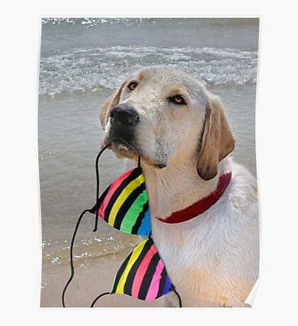Good Retriever Poster