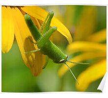 Green hopper! Poster