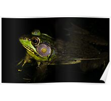 Frog in shade! Poster