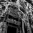 Cambodia Noir - Nature's Wonder by Tyson Battersby