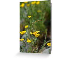 Yellow Poppy Greeting Card