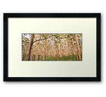 OLD KARRI FOREST, MARGARET RIVER Framed Print