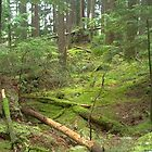 RAINFOREST OF LYNN VALLEY HEADWATERS by Doria Fochi