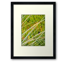 The Colors of the Dunes Framed Print