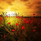 FOREVER POPPIES by leonie7