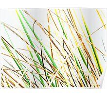 The Marram Grass  Poster
