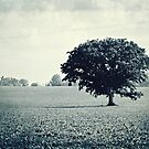 Solitary Tree by ArchetypePhoto