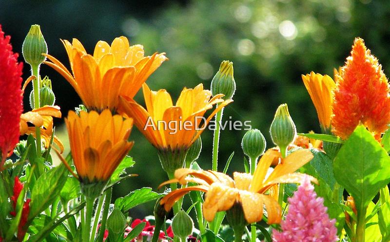 Summer Celebration by AngieDavies