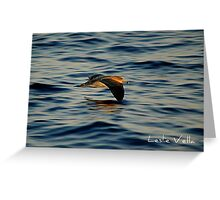 Cory's shearwater flying over the blue Mediterranean, Malta Greeting Card