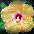Tropical Rain by Rocksygal52