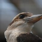 Bird Profile by Elizabeth Carpenter