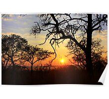 Sunrise, Kruger National Park Poster