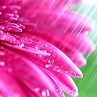 Pink Petals In The Rain by Christy Patino