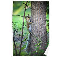 Oak Park Squirrel Poster