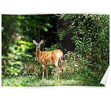 Momma Deer Poster