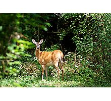 Momma Deer Photographic Print