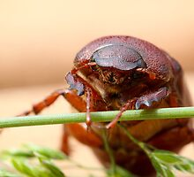 June Bug by Christy Patino
