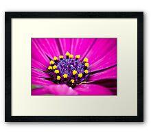 Macro Purple Daisy Framed Print