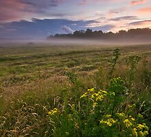 Misty, Suffolk by Thomas Harvey