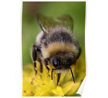 Summer Nectar Poster