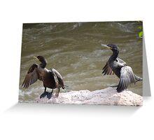 Nature's Synchronization I - Syncronización De La Naturaleza Greeting Card