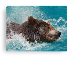 Bear's splashing in the Water Canvas Print
