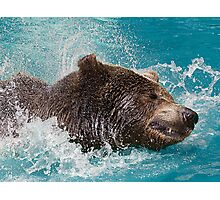 Bear's splashing in the Water Photographic Print