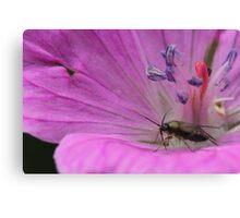 Flower Explorer Canvas Print