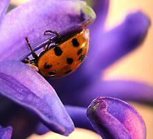 Ladybug On Purple by Christy Patino