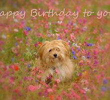 Happy Birthday to You by Annie Lemay  Photography