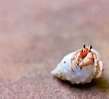 Cute hermit crab by Bruno Mesmin