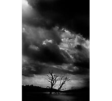 Trees, Threave Castle Estate, Scotland. Photographic Print