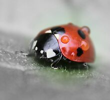 Ladybird by JulieGrant