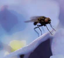 The fly! by JulieGrant