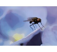 The fly! Photographic Print