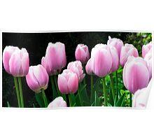 Tulip Landscape Poster