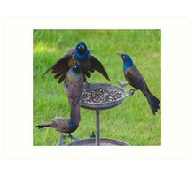 Grackles Doing What They Do Art Print