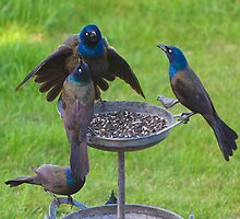 Grackles Doing What They Do by Christy Patino