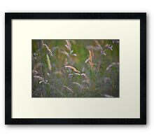 Soft Grasses Framed Print
