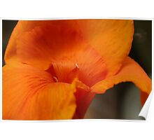 Canna Lily - Daily Homework - day 69 - July 16, 2012 Poster
